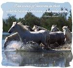 Horses w/ Proverb