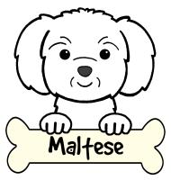 Maltese Cartoon T-Shirts and Gifts