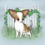 Garden Fence Chihuahua- Brown & White Smooth