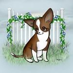 Garden Fence Chihuahua- Precious