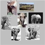 Elephant Photo Gifts