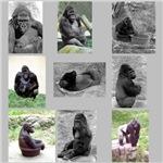 Gorilla Photo Gifts