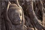 Buddha Head Incased In Tree Trunk