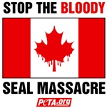 Stop the Bloody Seal Massacre