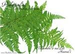 Native Hawaiian Plants