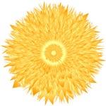 Orange Radiance Sunflower