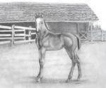 Fancy Foal