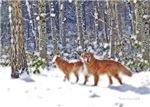 Golden Retriever Dog Winter Snow Designs