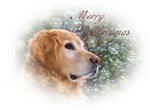 Merry Christmas Golden Retriever