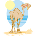 Camel T-shirt, Camel T-shirts, Camel gifts