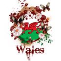 Butterfly Wales