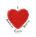 I (heart) American Bobtail Cats