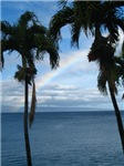 Maui Rainbow (Hawaii)
