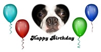HAPPY BIRTHDAY BOSTON TERRIER PICTURE