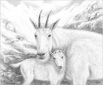 Mountain Goat Family by Marc Brinkerhoff