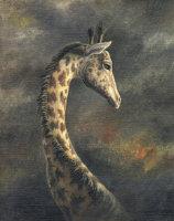Masai Giraffe by Marc Brinkerhoff