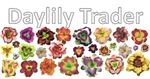Daylily Trader