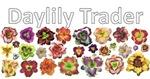 Daylily Trader