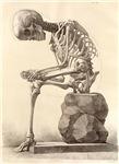 artistic skeleton 2