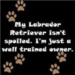Well Trained Labrador Retriever Owner