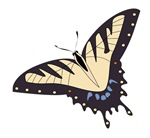 Black And Tan Butterfly