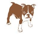 Brown Boxer Puppy