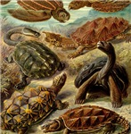 Beautiful Turtle Artwork