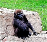 Little Kong, Photo / Digital Painting