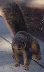 Squirrelin' Around Photo