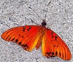 Winged Beauty, Photo / Digital Painting
