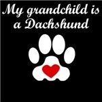 Dachshund Grandchild