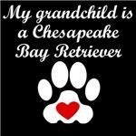 Chesapeake Bay Retriever Grandchild