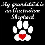 Australian Shepherd Grandchild
