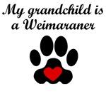 Weimaraner Grandchild