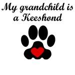 Keeshond Grandchild