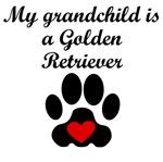 Golden Retriever Grandchild