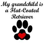 Flat-Coated Retriever Grandchild