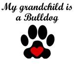 Bulldog Grandchild