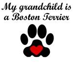 Boston Terrier Grandchild