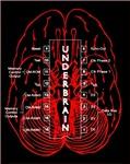 <b>Underbrain</b>