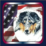 Blue Merle Sheltie USA Flag Gifts Products