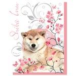 Cherry Blossom Shiba Inu