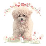 Poodle Flowers