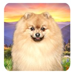 Pomeranian Meadow