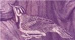Mauve Birdsong