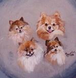 4 Pomeranians