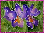 Tropical orchid art