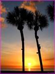 Palm trees, sunset, photo