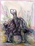 Deset tortoise, nature, art,