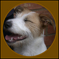 DOG T-SHIRTS & GIFTS